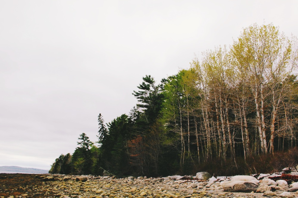 Shades of Green in Maine