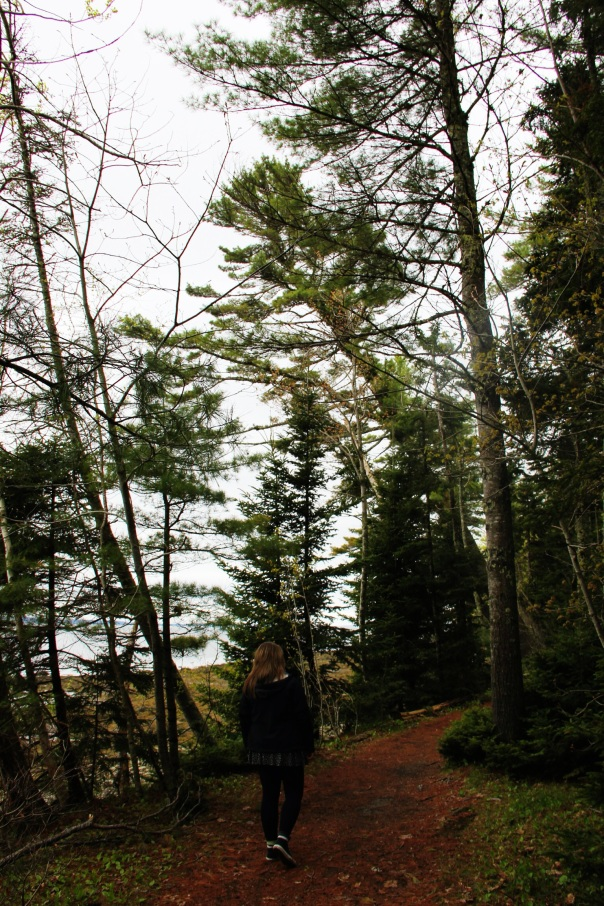 A little Maine Forest