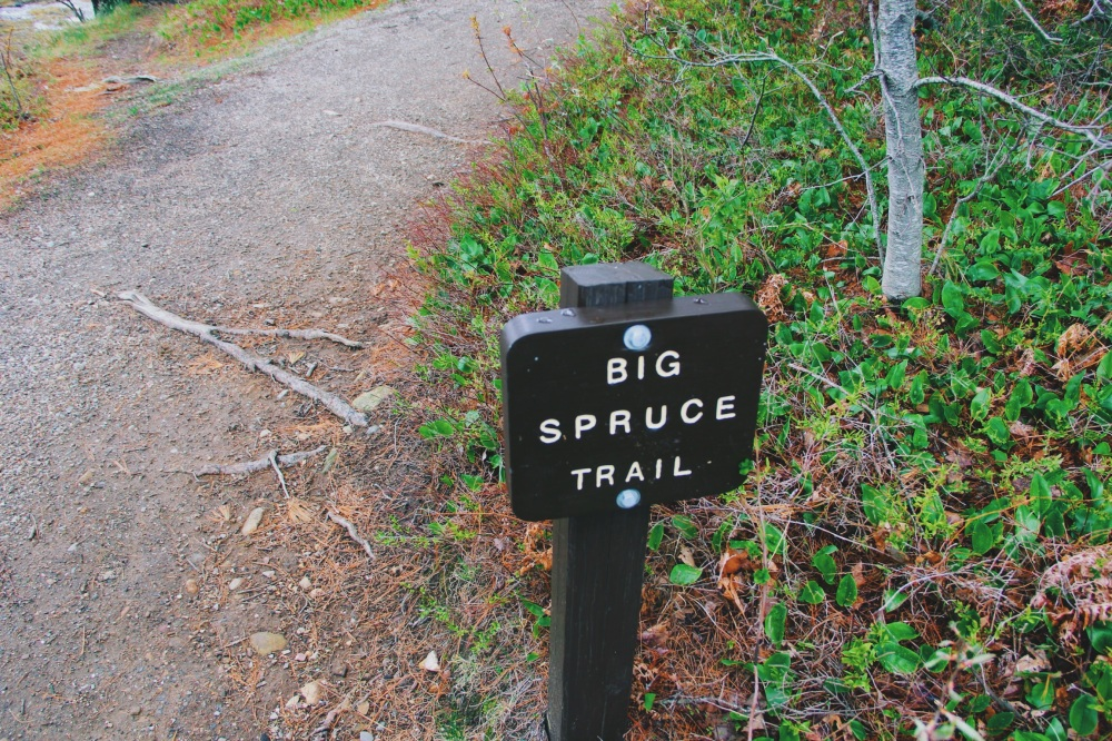 Big Spruce Trail, Maine