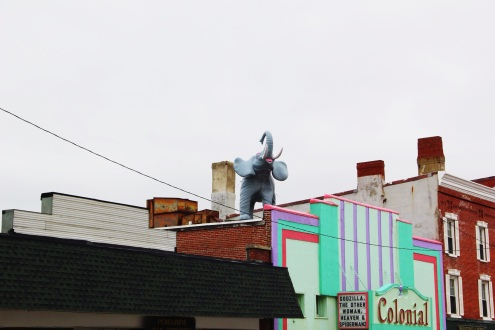 Elephant on the Roof, Maine