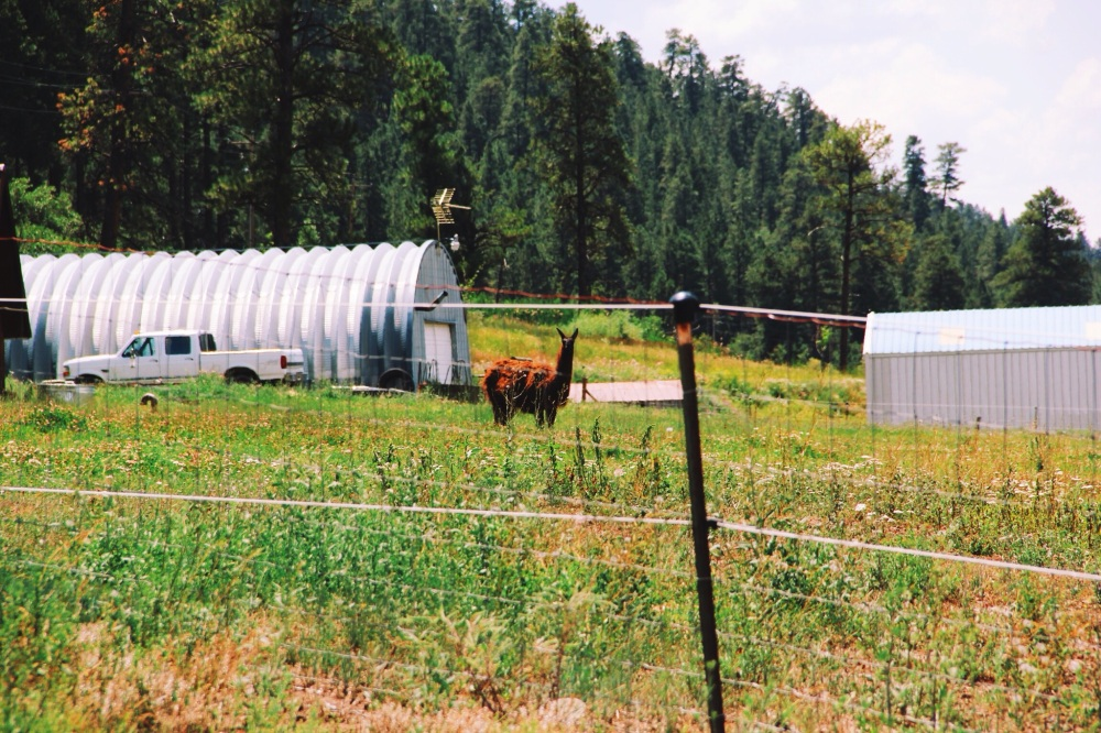 Processed with VSCOcam with k2 preset