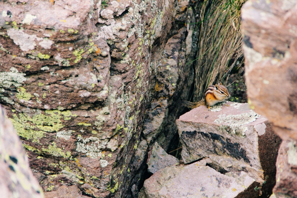 Little wildlife in south west colorado