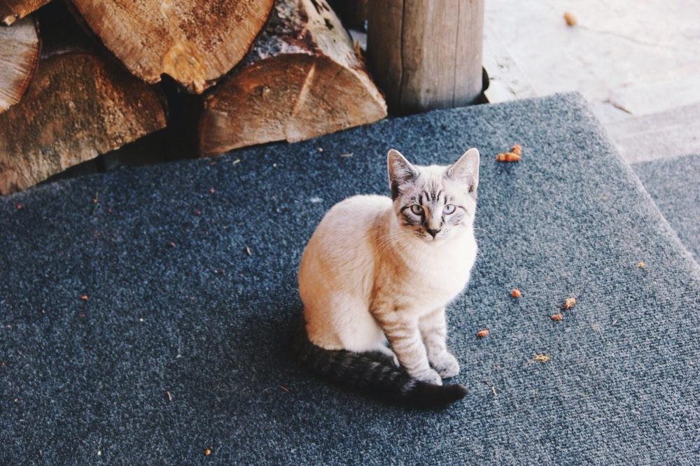 Colorado Cat, South Fork