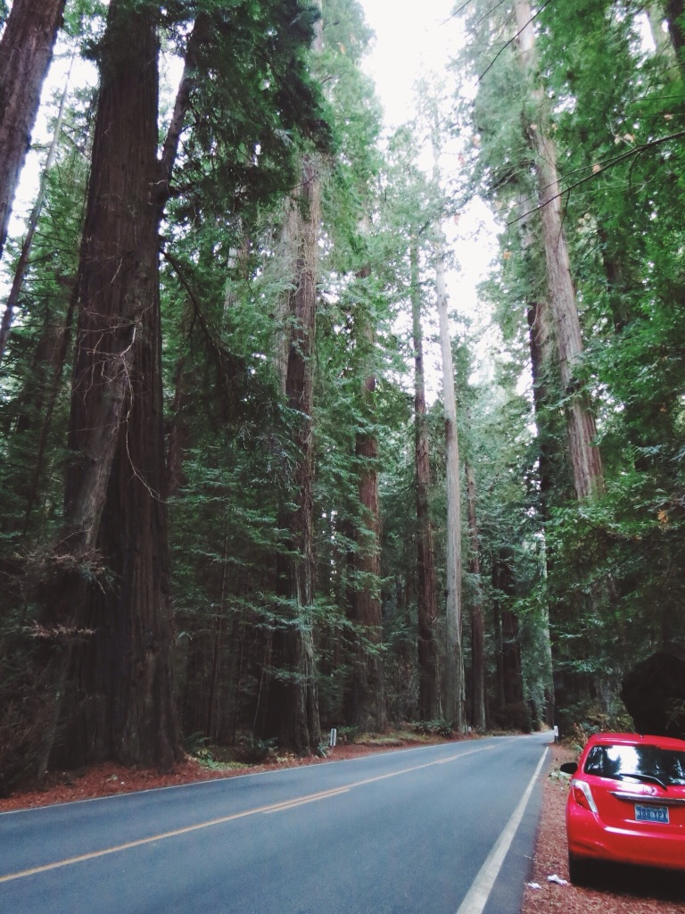 Roadtripping through the california redwoods