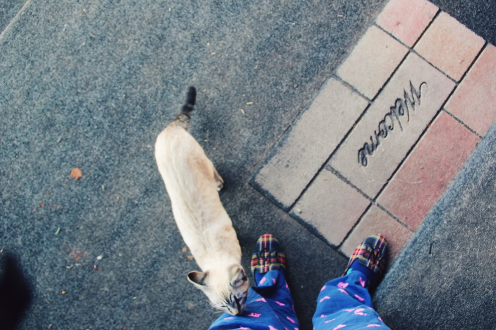 In my Pj, the cat was friendly