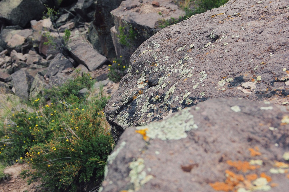 Moss covered rocks, Colorado