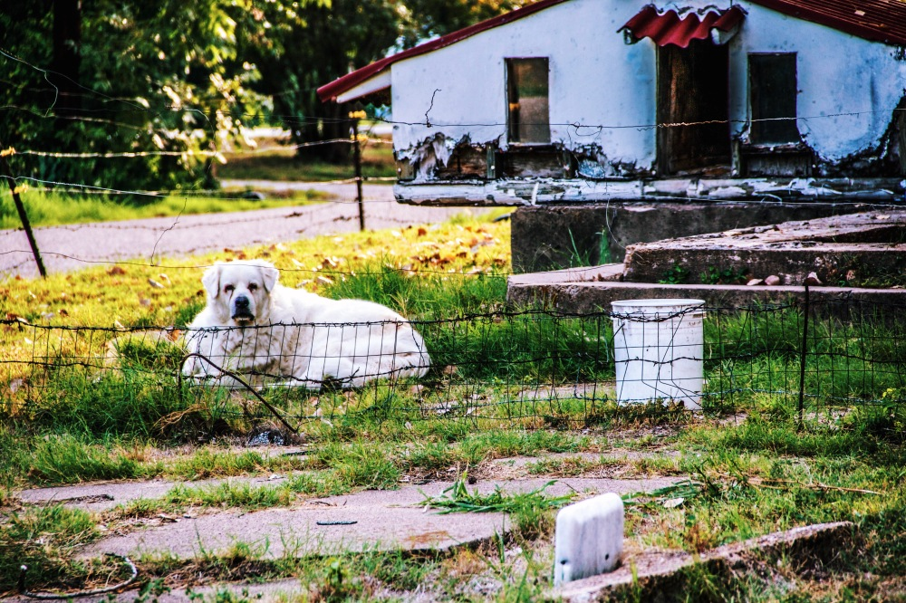 Old dog, guard your church, Nevada Texas