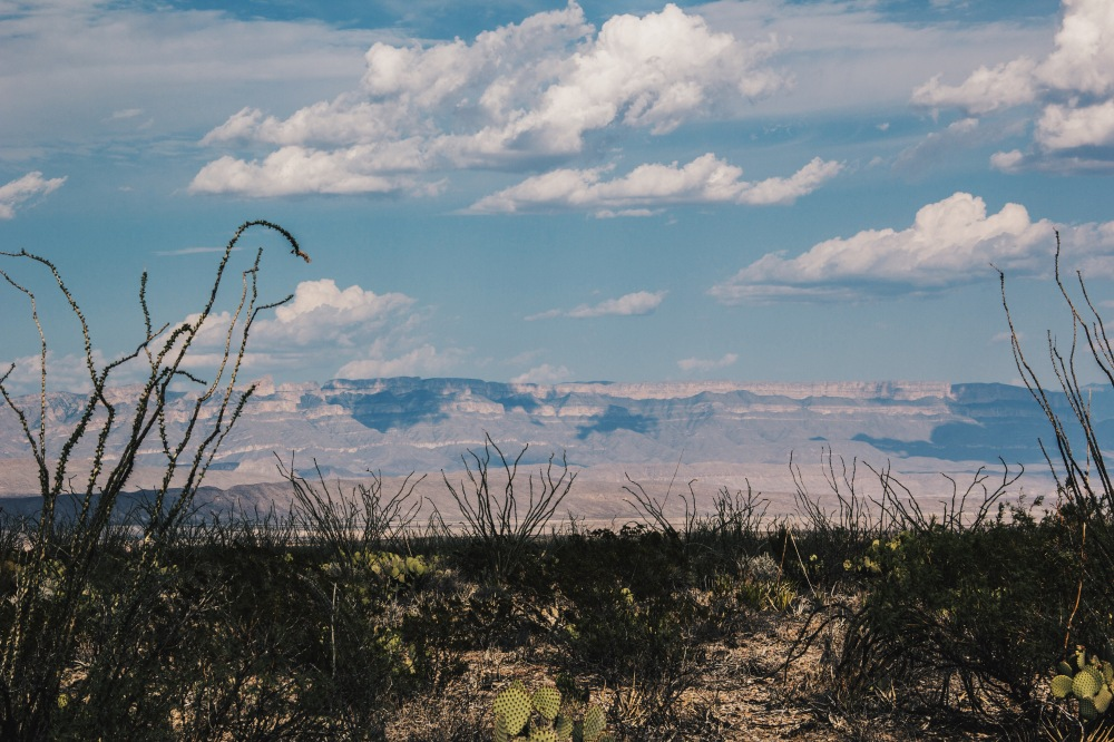 Big Bend natl. Park Landscape