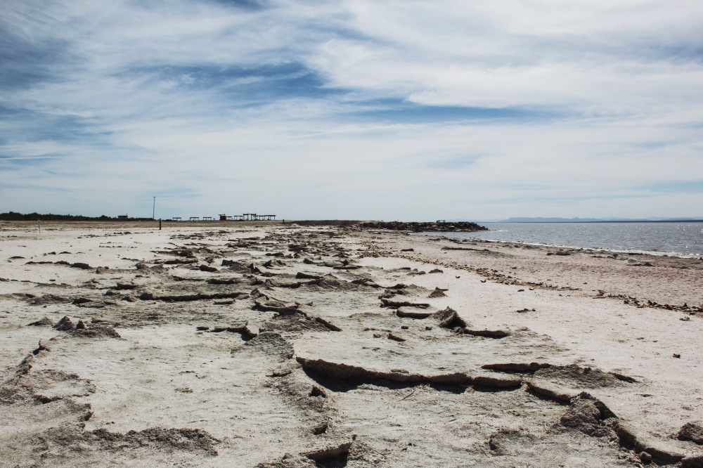 the beach at Salton Sea, California