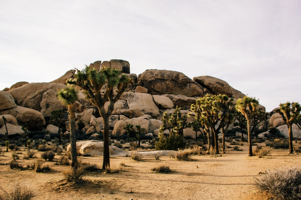 Joshua Tree NP, California